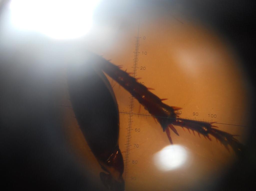 Biol2011_15